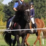 Gehorsam und Reiterprüfung