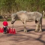 Spaß mit Pferden, auch zu Boden