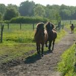 Die Pferde kommen morgens von der Weide