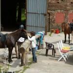 Die Pferde werden mit den Kindern gemeinsam gesattelt.